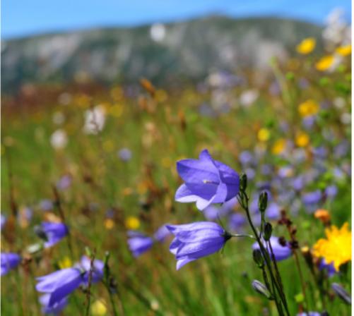 Bier og blomster i Tessungdalen